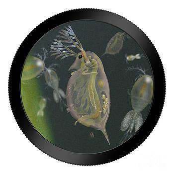 Urft Valley Art - Water Flea - water fleas - daphnia - Wasserfloh - fine art print - stock illustration - stock image