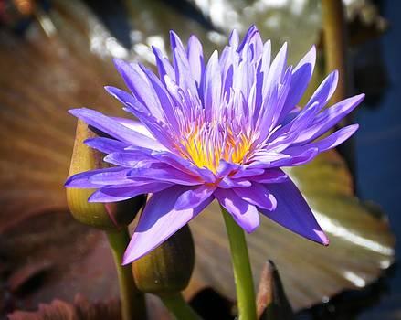 Marty Koch - Water Flower 1004d