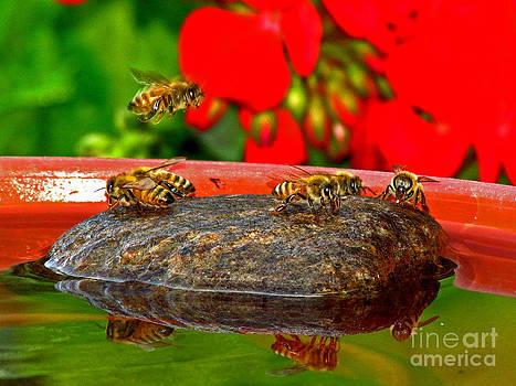 Water for Honey Bees 3 by Deborah Johnson