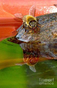Water for Honey Bees 4 by Deborah Johnson