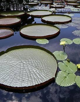 Water Garden by Jean Goodwin Brooks