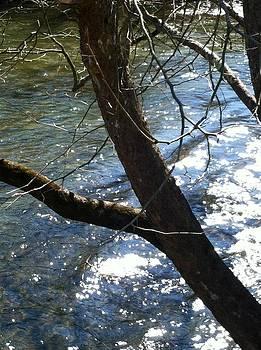 Water in Spring by Robert J Andler