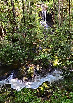 Water in the Forest by Susan Leggett