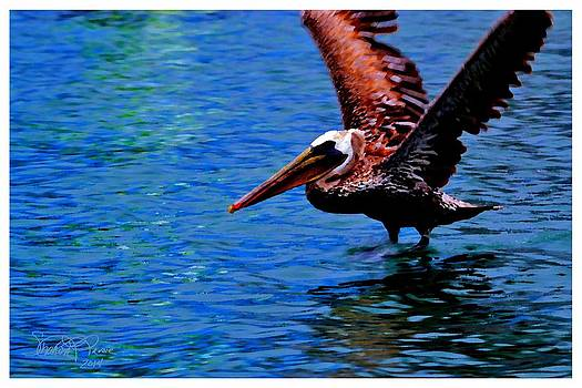Water Landing by Sharon  Lavoie