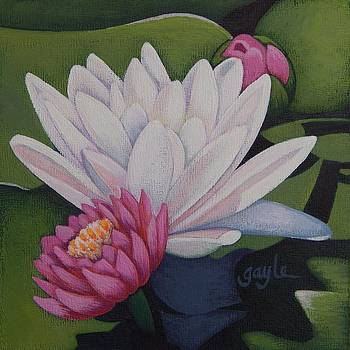 Water Lilies by Gayle Faucette Wisbon