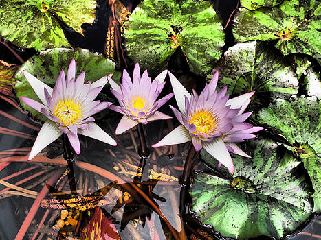 Water Lilies Water Drop and Reflection in Water by Donna Haggerty
