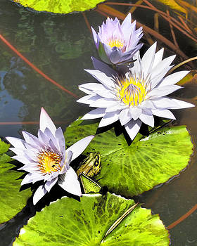 Water Lilies with Peeking Frog by Donna Haggerty