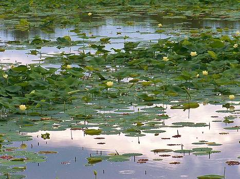 Water Lillies by Julie Grace