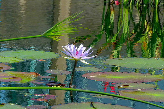 Water Lily 3 by Michael Rudolf