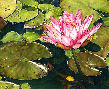 Water Lily at the Biltmore Gardens by Suzannah Alexander