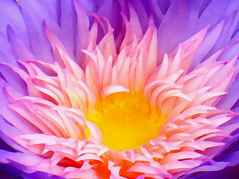 Amy Vangsgard - Water Lily Close-Up