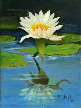 Water lily by Esther Rivas