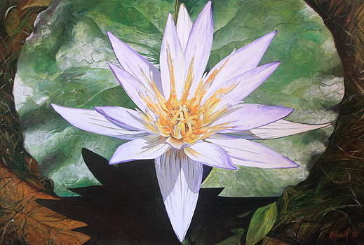 Water Lily by Kitty Harvill