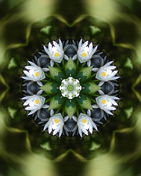 Water lily mandala by Peter Kallai
