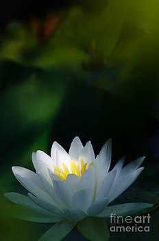 Oscar Gutierrez - Water Lily