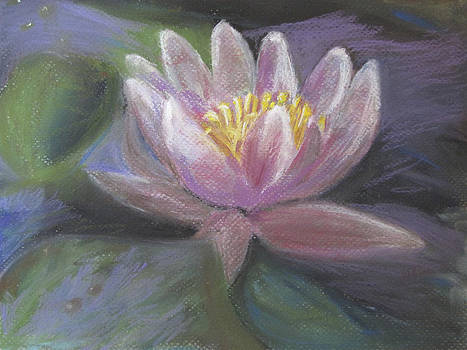 Water Lily by Randy Ross