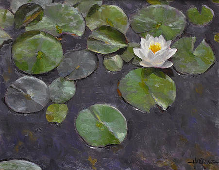 Water Lily by Scott Harding