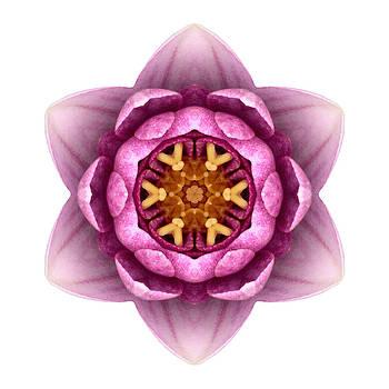 Water Lily X Flower Mandala White by David J Bookbinder
