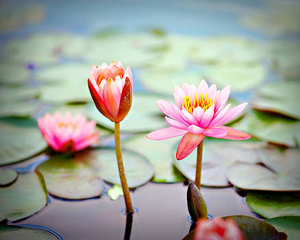 Water Lily's II by Tammy Smith
