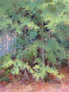 Water Oak by Marsha Savage