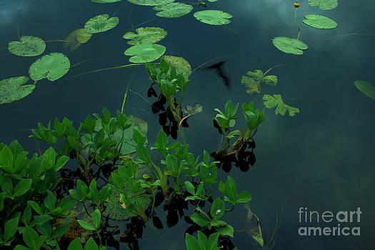 Water plants by Sanjay Deva