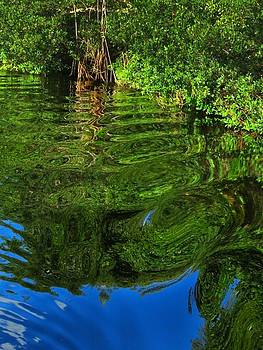 Water Reflections Everglades Florida by Bill Marder