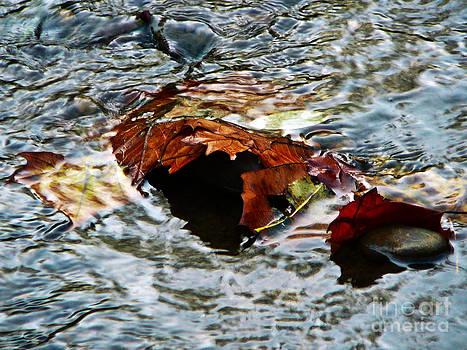 Waterborne Leaves by Chris Sotiriadis