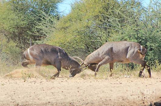 Hermanus A Alberts - Waterbuck Power