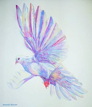 Watercolor Dove Study by Amanda Hukill