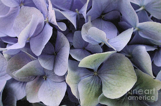 Kathi Shotwell - Watercolor Hydrangea 3