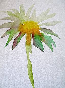 Watercolour Daisy by Sacha Grossel