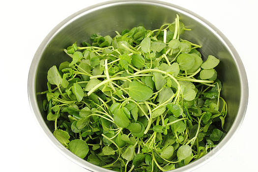Watercress in a Stainless Steel Bowl by Lee Serenethos