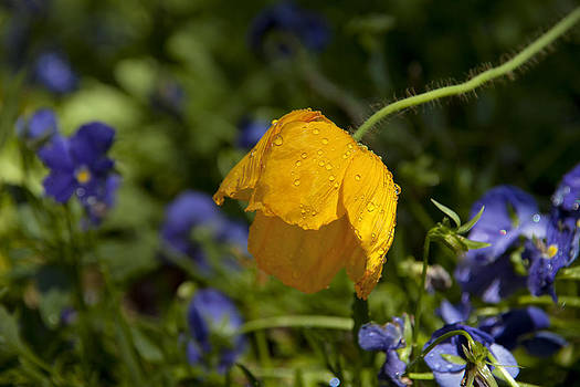 Waterdrops on Yellow by Heather Reeder