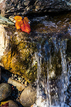 Mick Anderson - Waterfall and Autumn Leaf