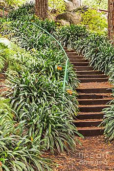 Kate Brown - Waterfall Stairway