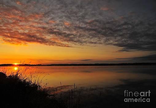Terri Gostola - Waterfront Dawn