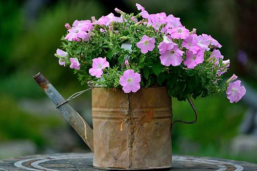 Watering can and flowers by Kathy King