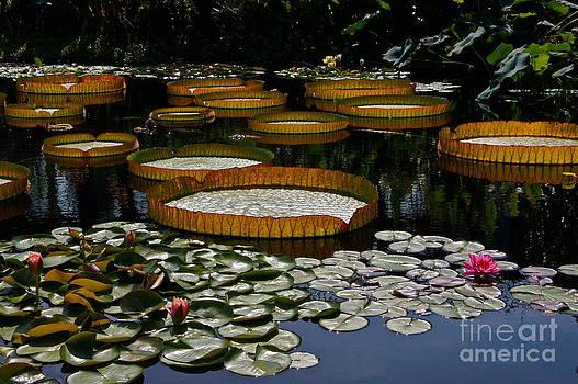 Byron Varvarigos - Waterlilies All