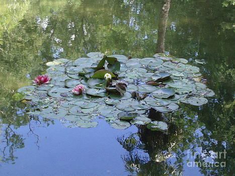 Waterlilies by Bernice Grundy