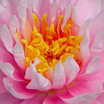 Waterlilly by Kathryn Potempski