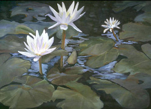 Waterlily Hawaii by Marcy Silverstein