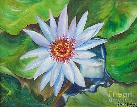 Irene Pomirchy - Waterlily