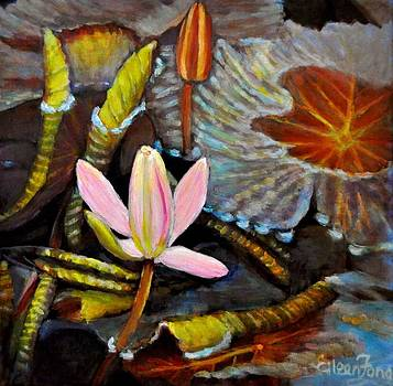 Waterlily Pond by Eileen  Fong