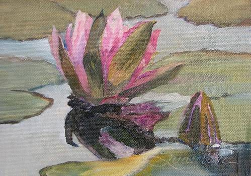 Waterlily Reflections by Lori Quarton