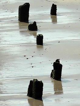 Waterlogged by Deborah  Crew-Johnson