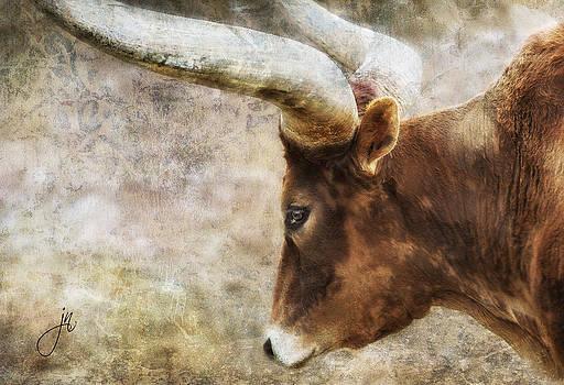 Watusi by Judy Neill