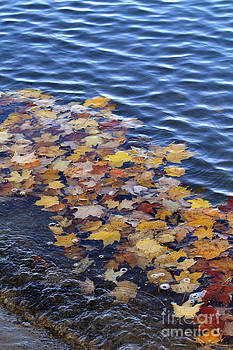 Wave of Fall Leaves by Kathy DesJardins