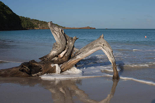 Waves hit driftwood by Kim French