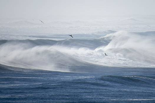 Waves Wind Birds and Sunshine  by Kristal Talbot