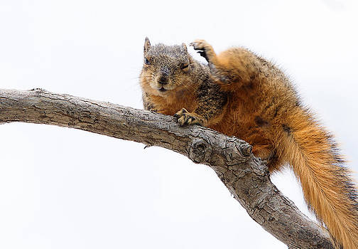 Waving At a Nut by Lisa Moore